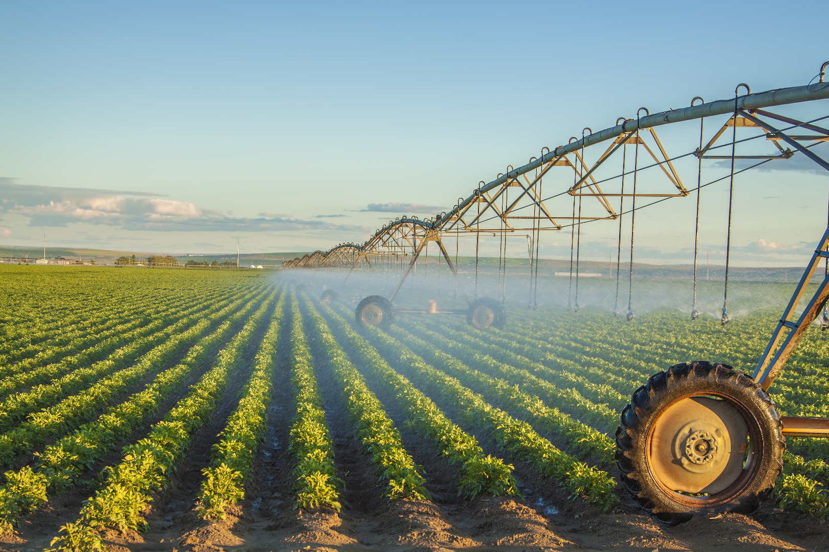 Irrigation culture.jpeg